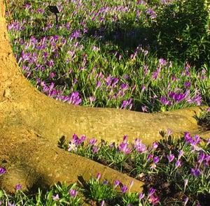 Image of Spring Walk