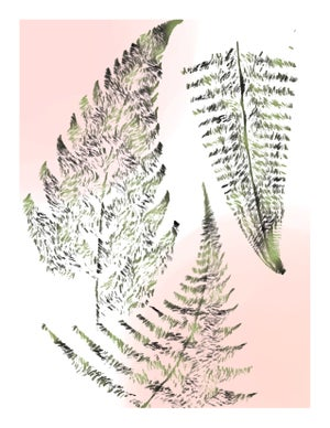 Image of Ferns (Single edition)