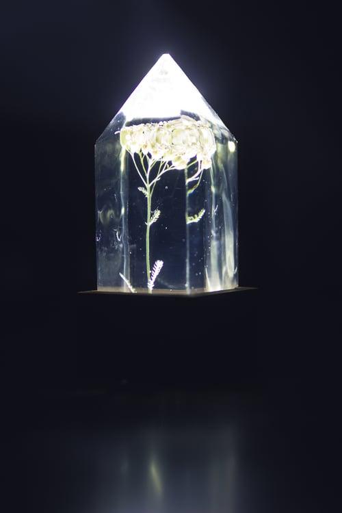 Image of Yarrow (Achillea millefolium) - Floral Night-Light #1