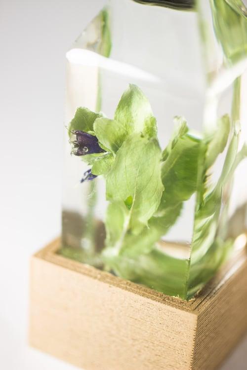 Image of Honeywort (Cerinthe major) - Floral Night-Light #1