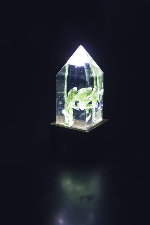 Image of Honeywort (Cerinthe major) - Floral Night-Light #2