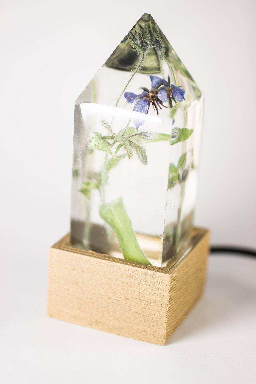 Image of Borage (Borago officinalis) - Floral Night-Light