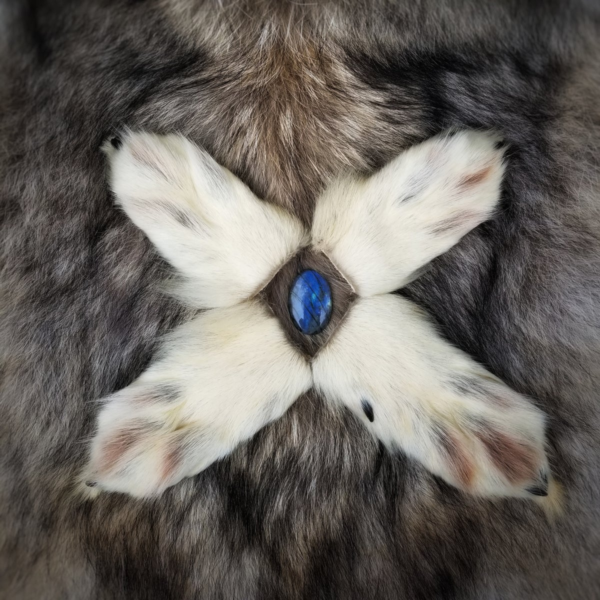 Image of Wolf Paws with Claws