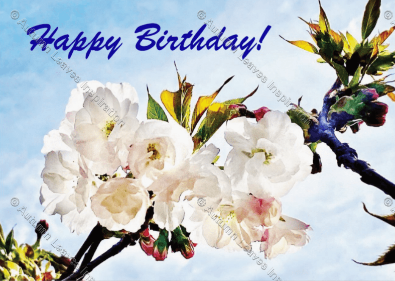 Image of C20 Happy Birthday Blossoms - NEW!