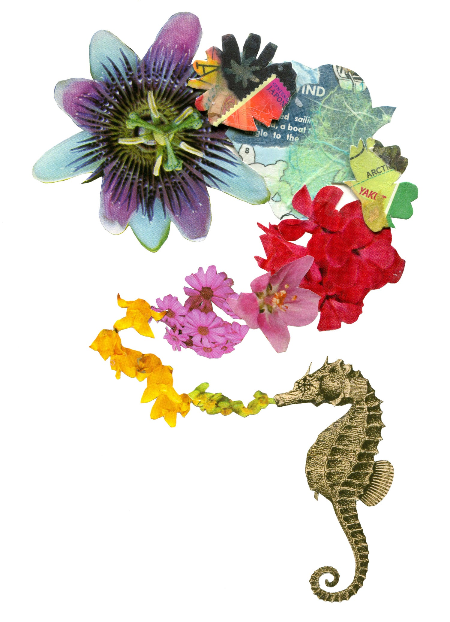 Image of Seahorse 2 Gift Cards (Set of 3)