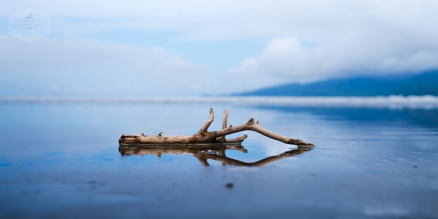 Image of Pacific Driftwood