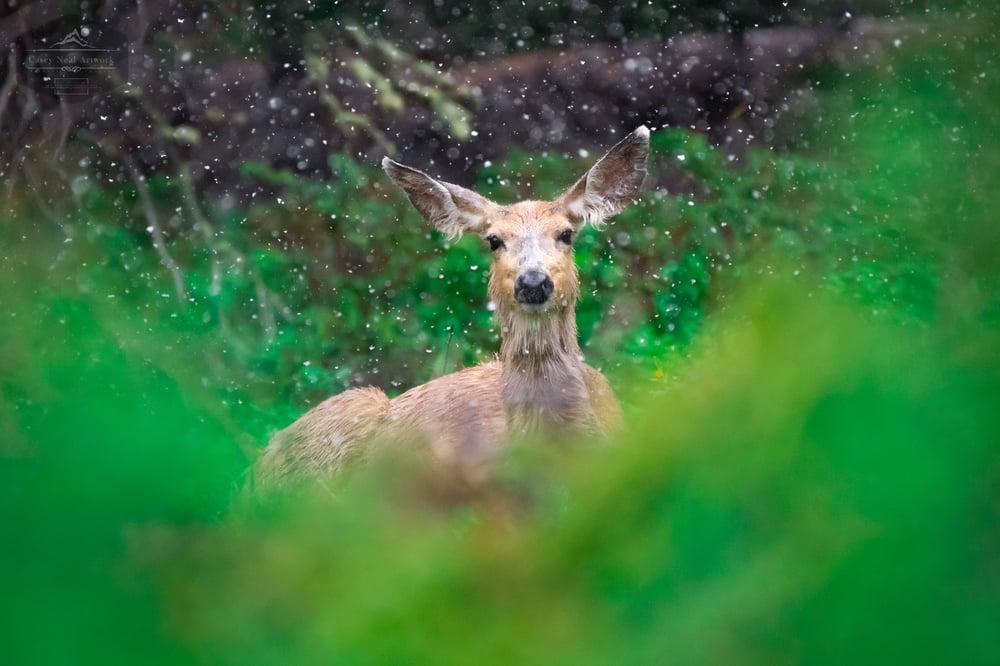Image of Snowstorm Deer