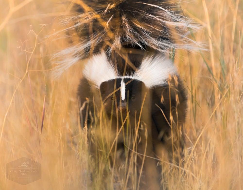 Image of Elusive Skunk