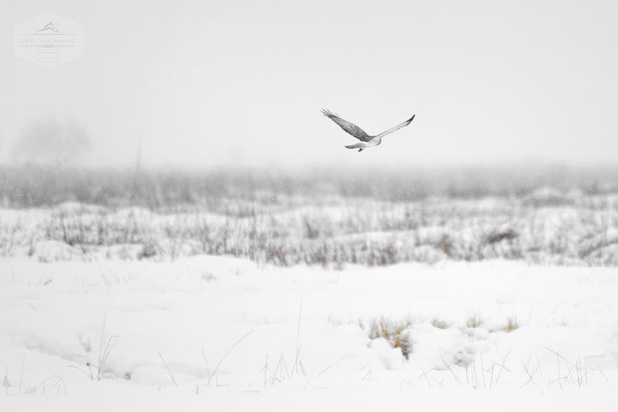 Image of Snow Flight