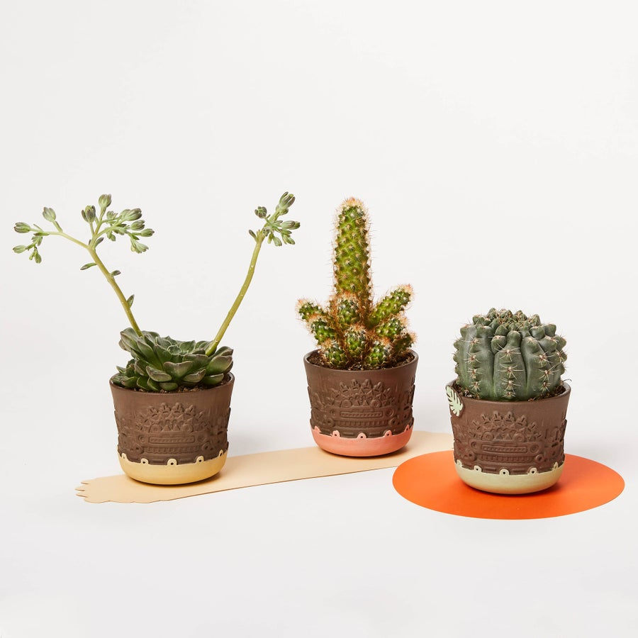 Image of LIMITED EDITION manoa colored flower pot trio S