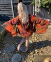 Jewelled hoodie kimono orange