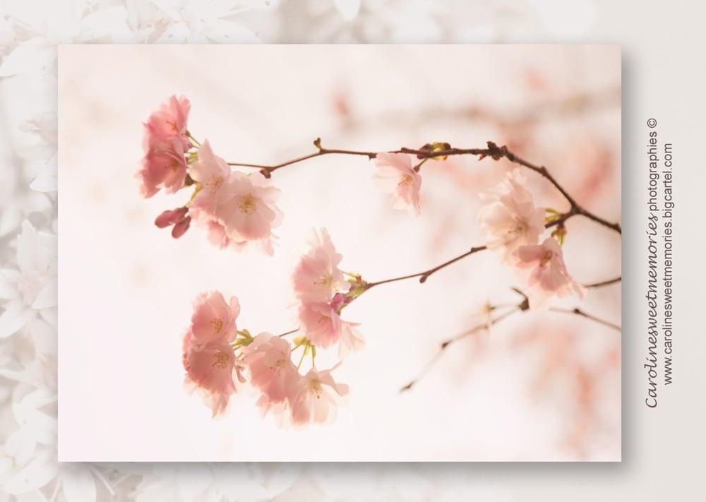 Image of Spring (2) | carte postale