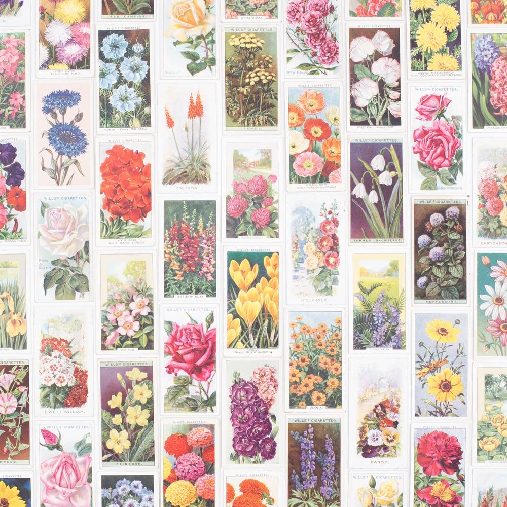 Image of Flower Cigarette Card Variety Pack - Set of 8