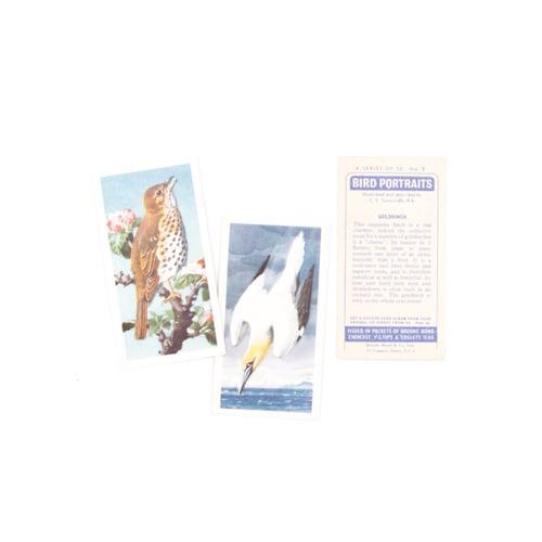 Image of Bird Portraits Tea Cards - Complete Set
