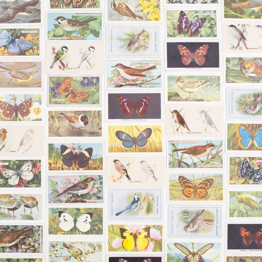 Image of Birds & Butterflies Cigarette Card Variety Pack - Set of 8