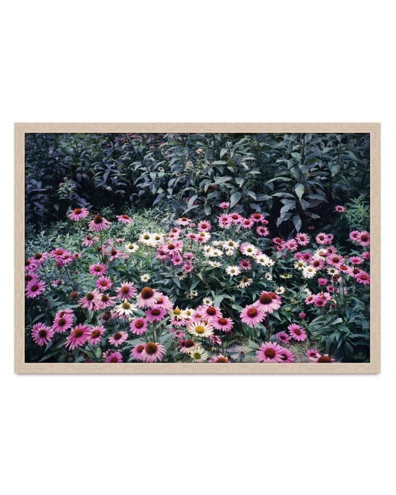 Image of Jesse Lizotte - 'Daisies'. Original artwork