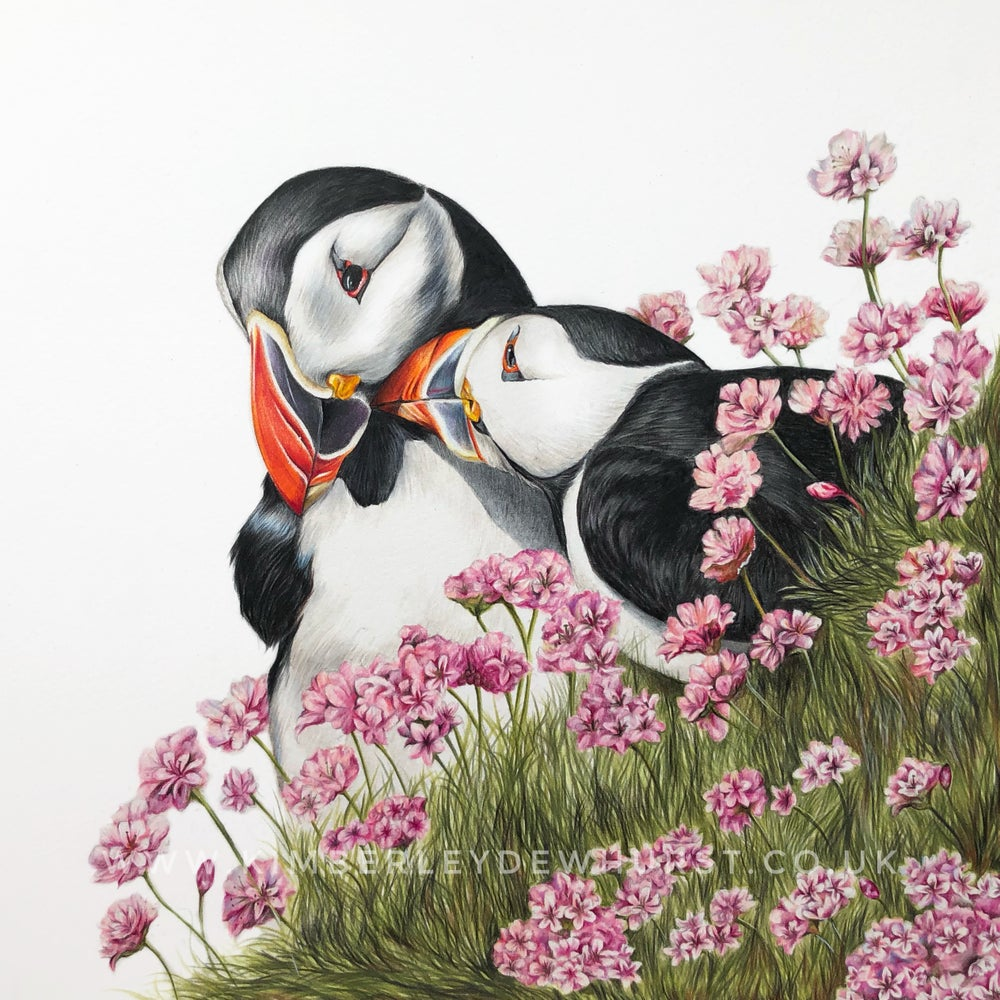 Image of 'Puffins' Limited Edition Print