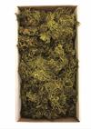 Moss Vase Filler