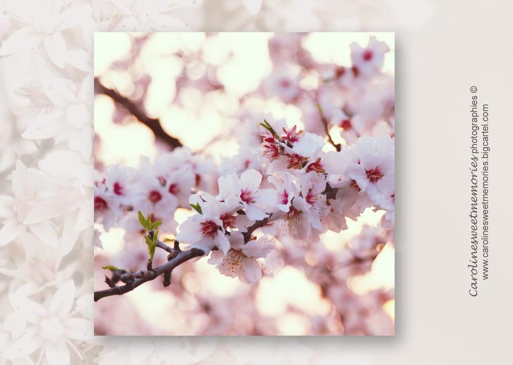 Image of Fleurs d'amandier | carte postale