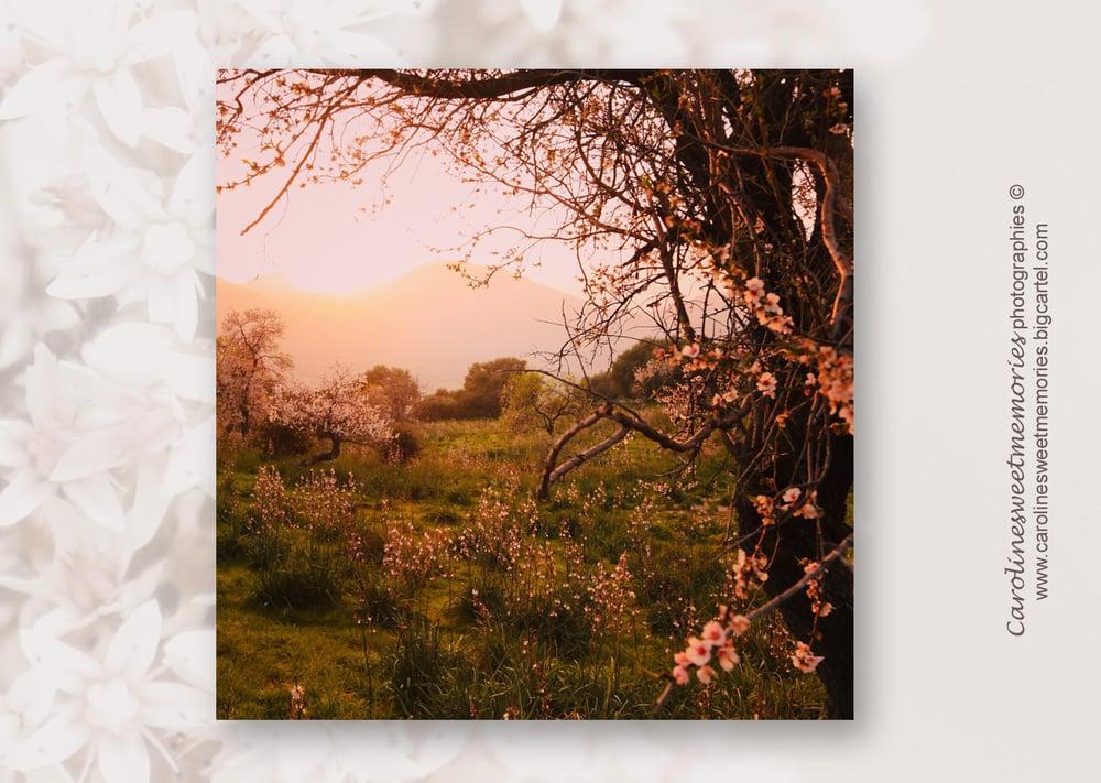 Image of Rêverie | carte postale