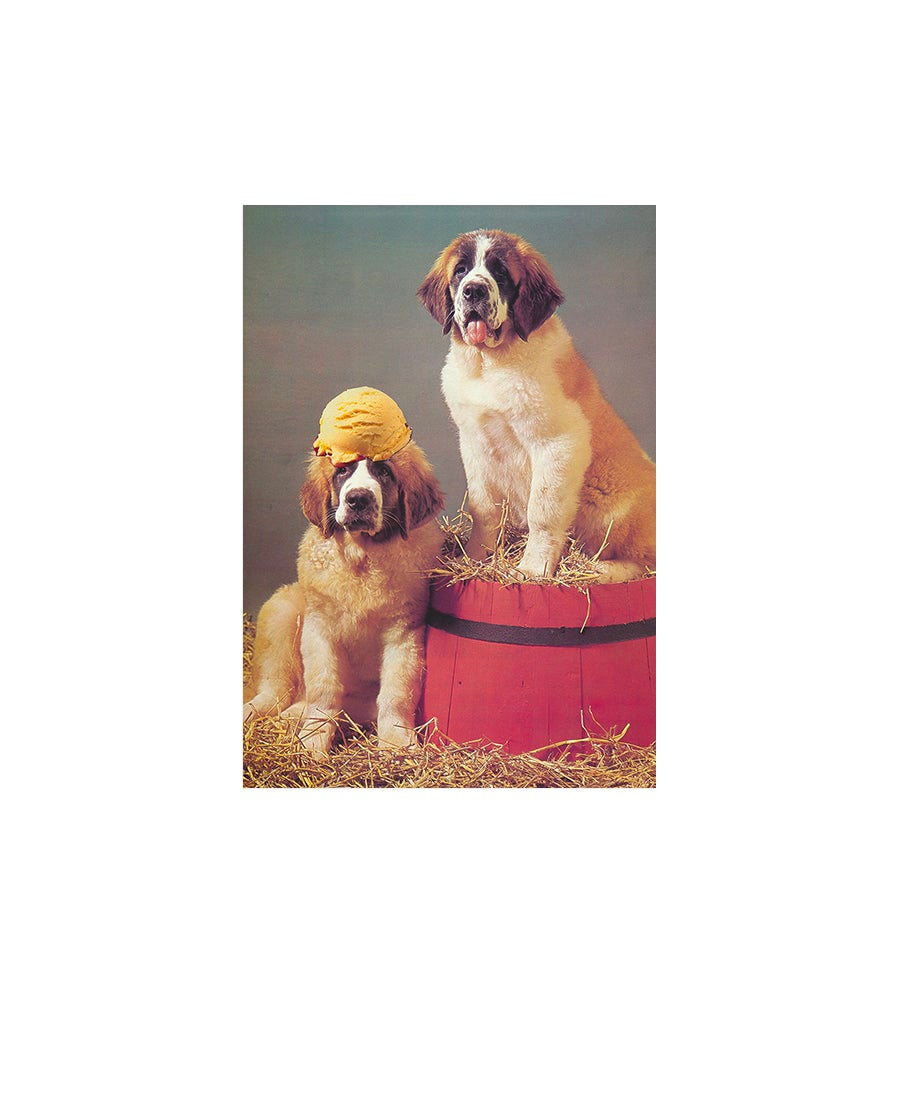 Image of 'Craving Snacks and Dogs' - postcard set (6)