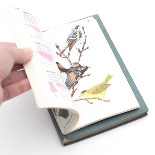 Image of Birds Golden Guide