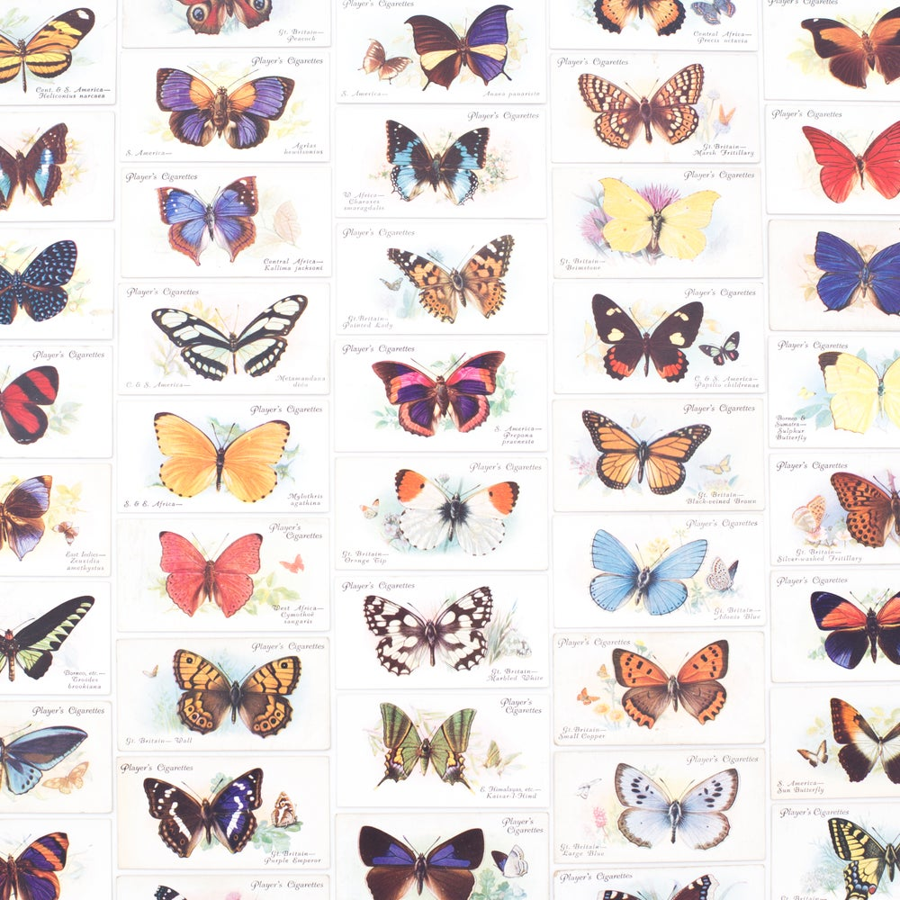 Image of Butterflies Cigarette Cards - Set of 8
