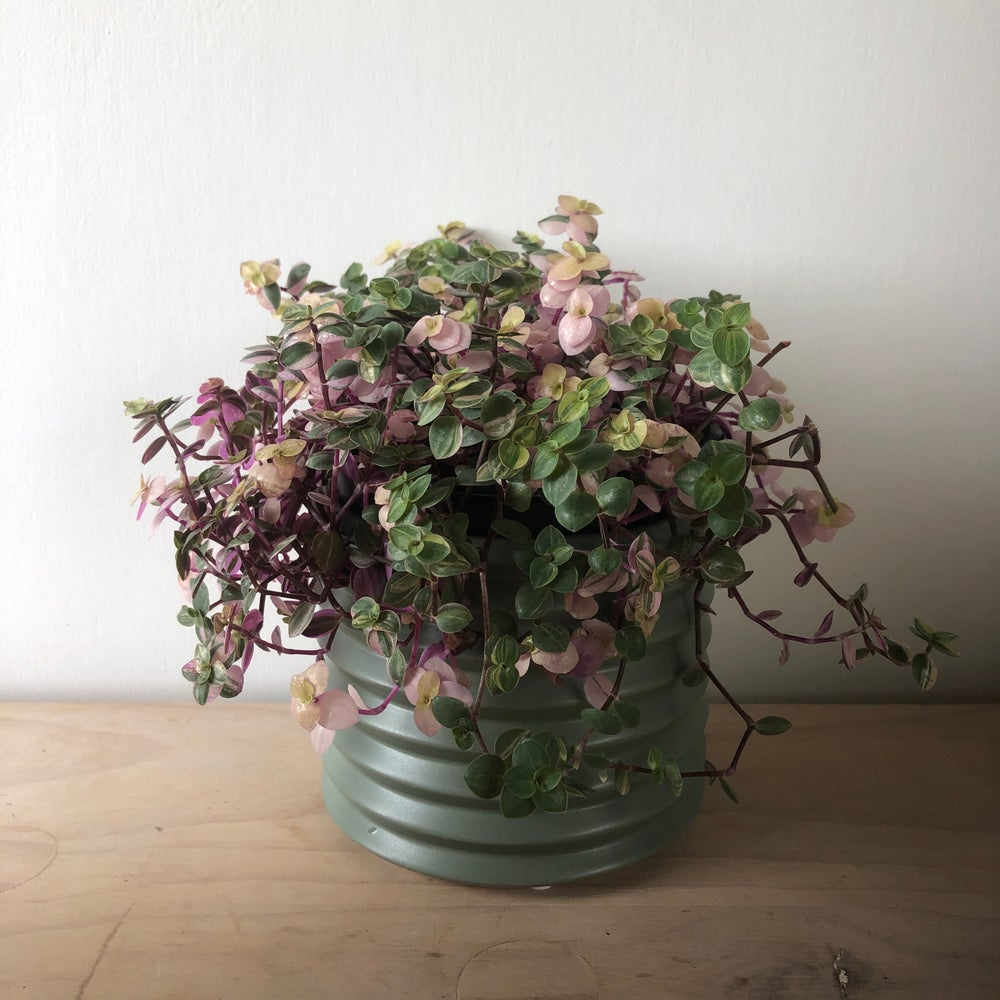 Image of Berlin ceramic planter