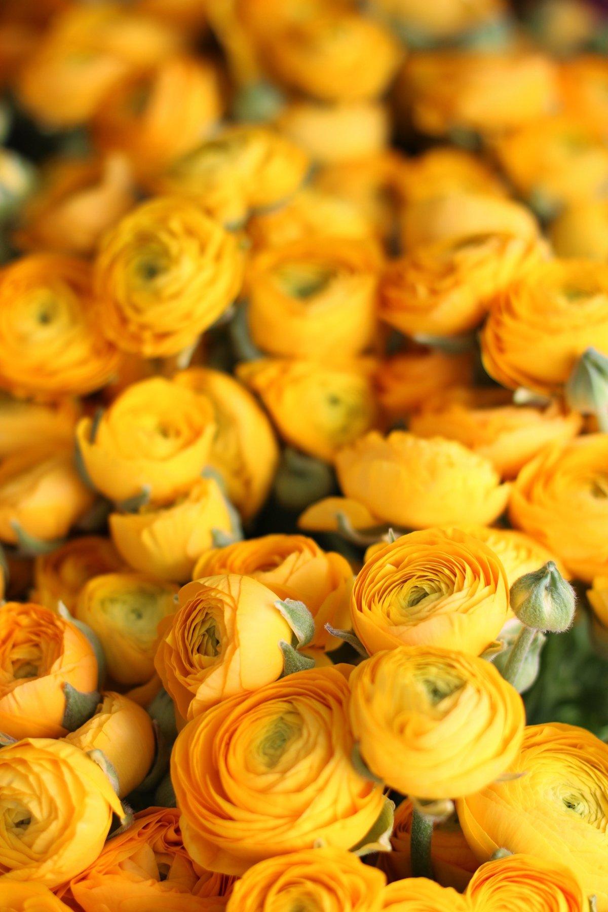 Image of Floral Fundamentals Workshop :: A Riot of Ranunculus
