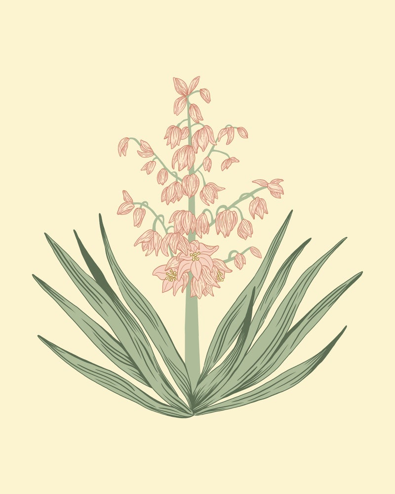 Image of Blooming Yucca