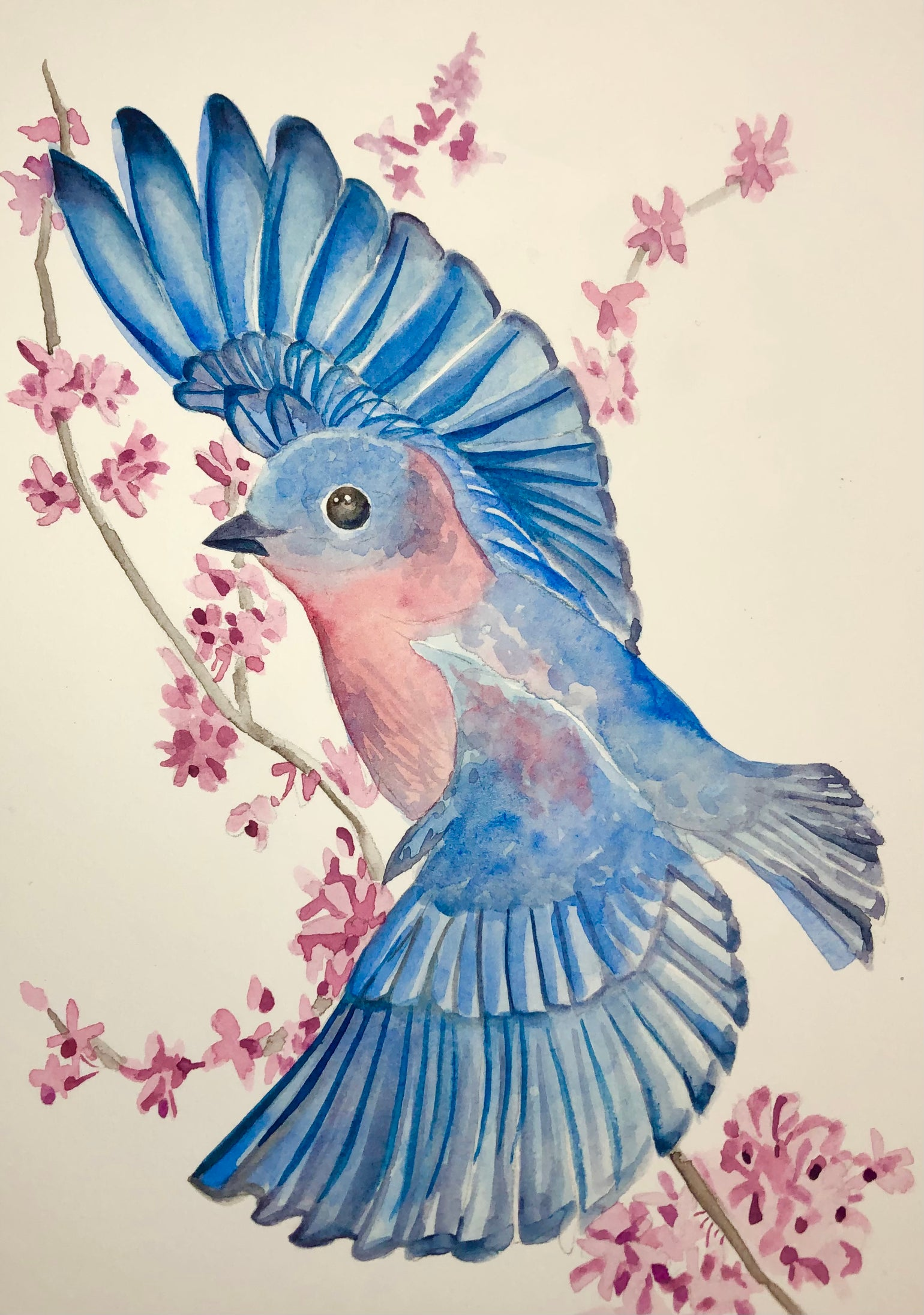 Image of Blue Bird with Redbud Branches