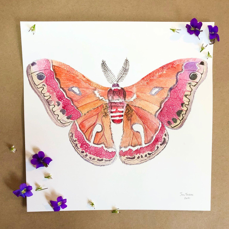 Image of Cecropia Moth