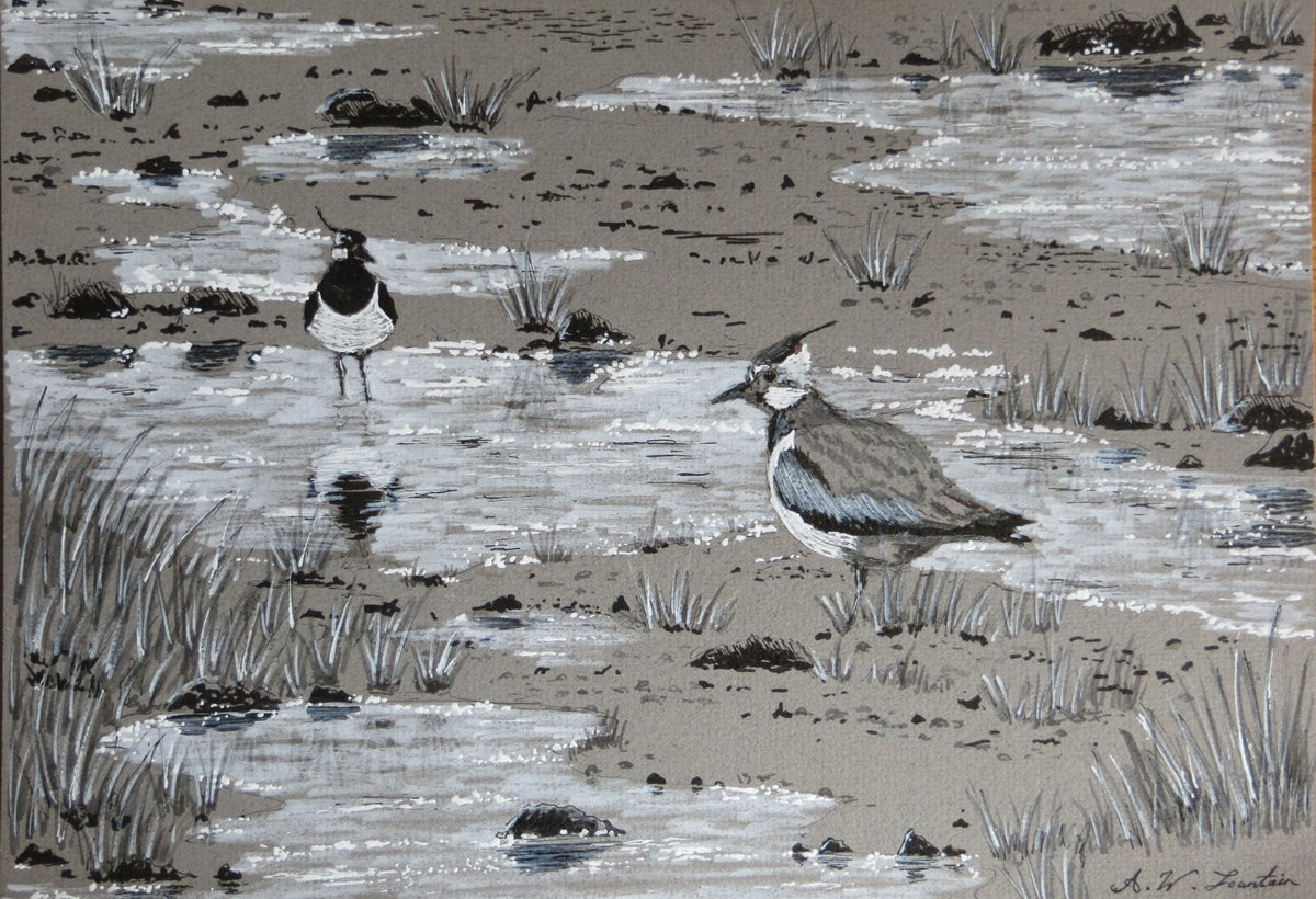 """Anthony Fountain """"Lapwings"""""""