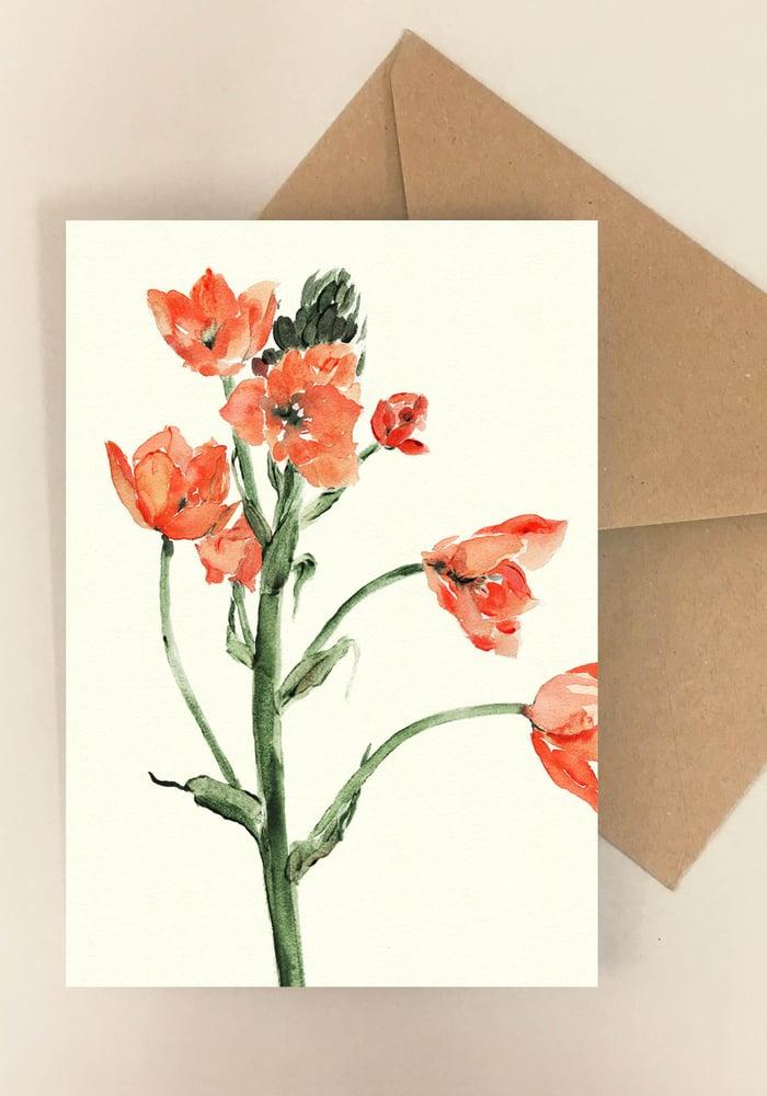 Image of 5 Notecards Ornithogalum