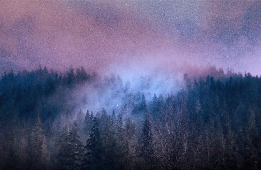 Image of Whispering Woods.