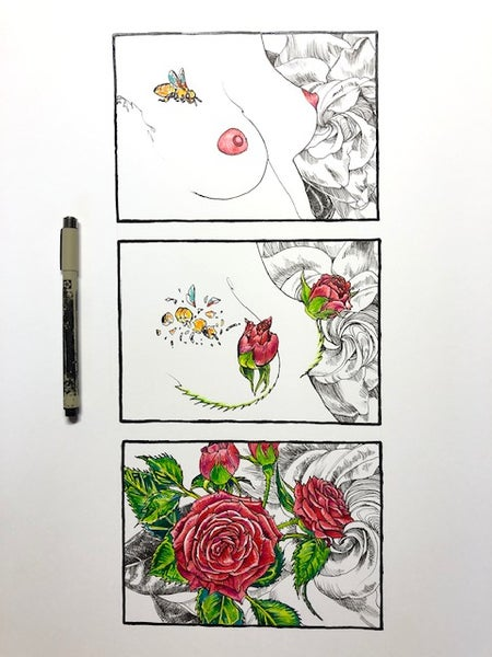 Image of Blossoming Rose