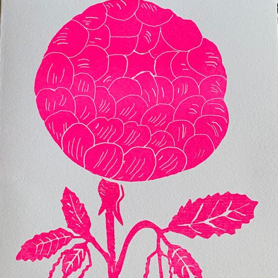 Image of Pink Rose