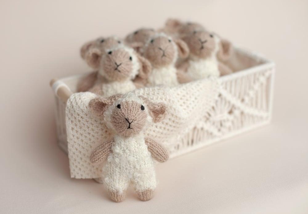 Image of Lamb Lovie