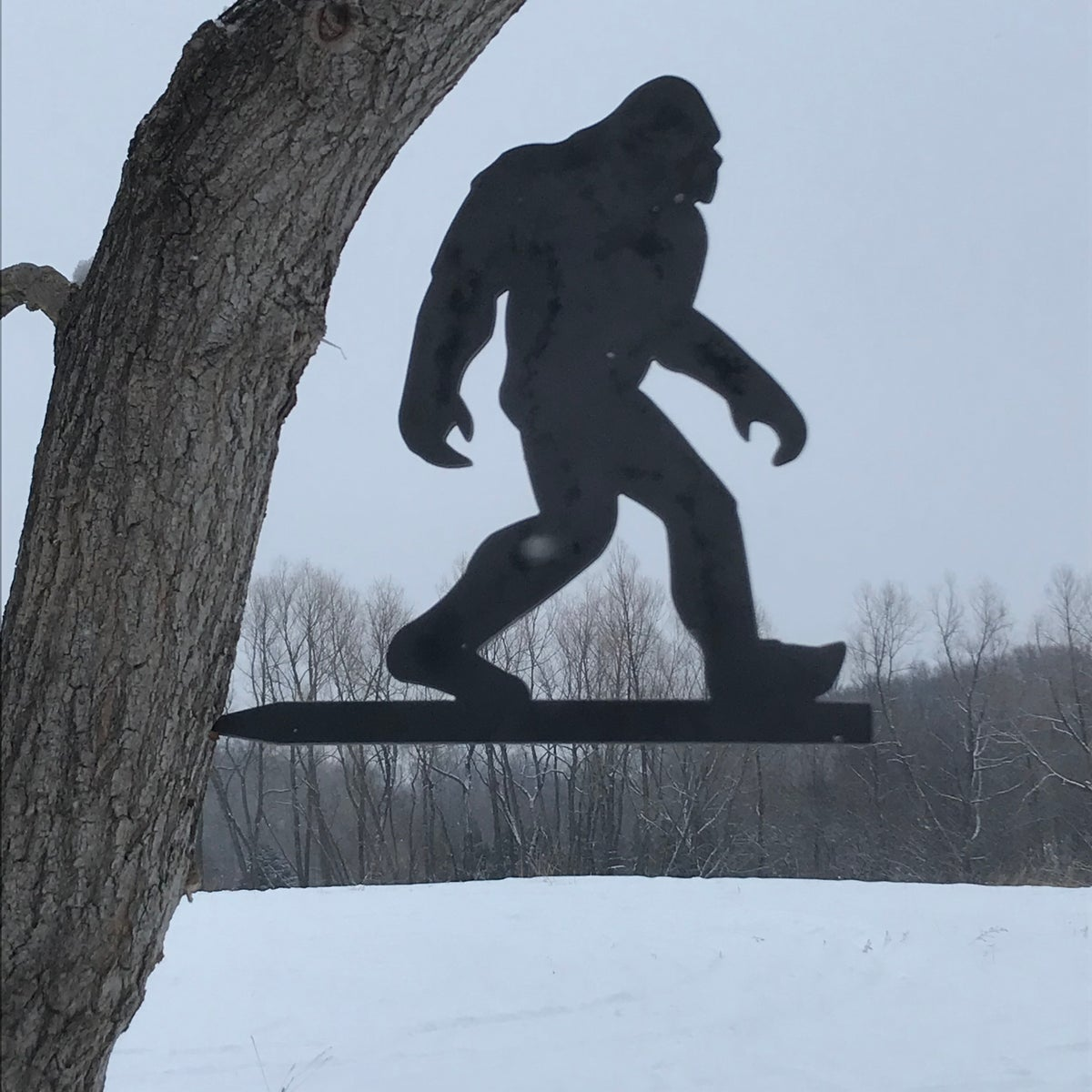 Sasquatch - Big Foot