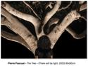 The tree (Tirage d'art 1/10 ex.)