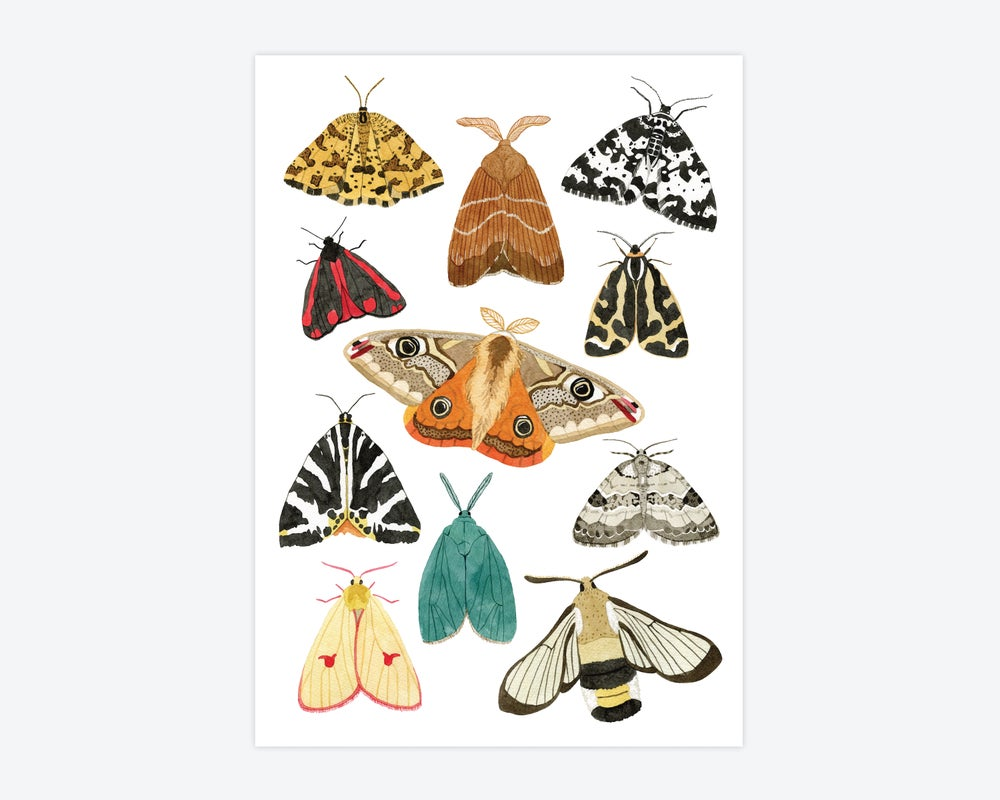 Image of Moths Print