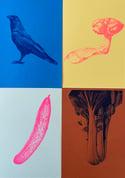 Raven riso print blue/brown
