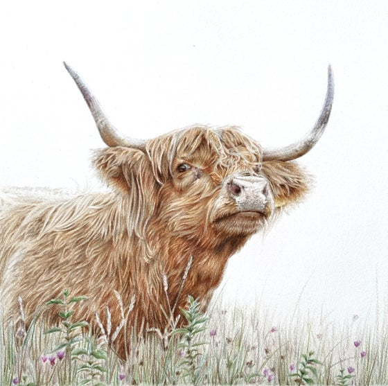 Image of 'Meadow' Limited Edition Mounted Print