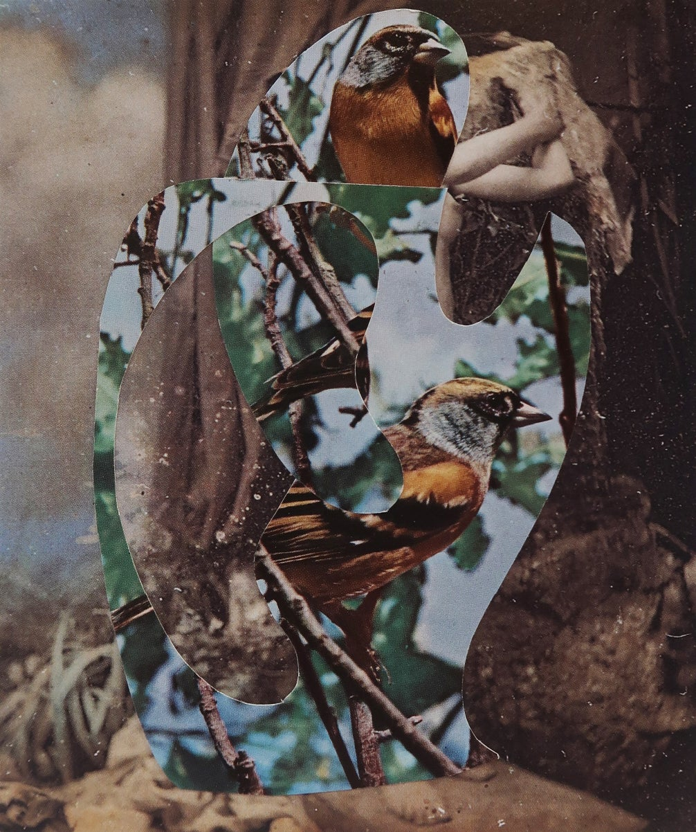 Nicolas Van Parys / Bird Song