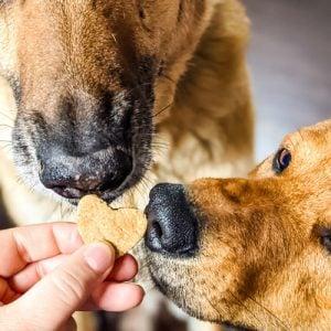 Image of Heart Shaped Dog Treats