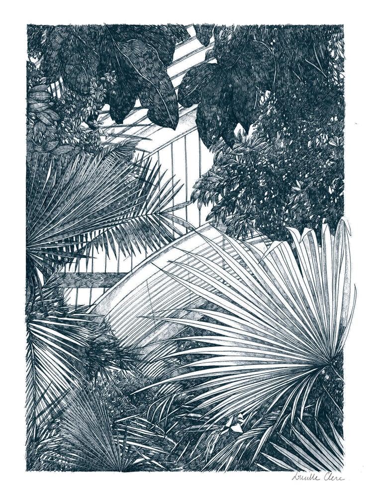 Image of Kew- Palm