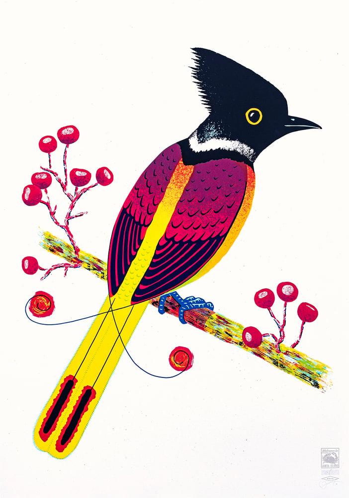 Image of »Bird of Janta Island«