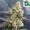 Master Kush ( Island Life Seeds ) 5 pk