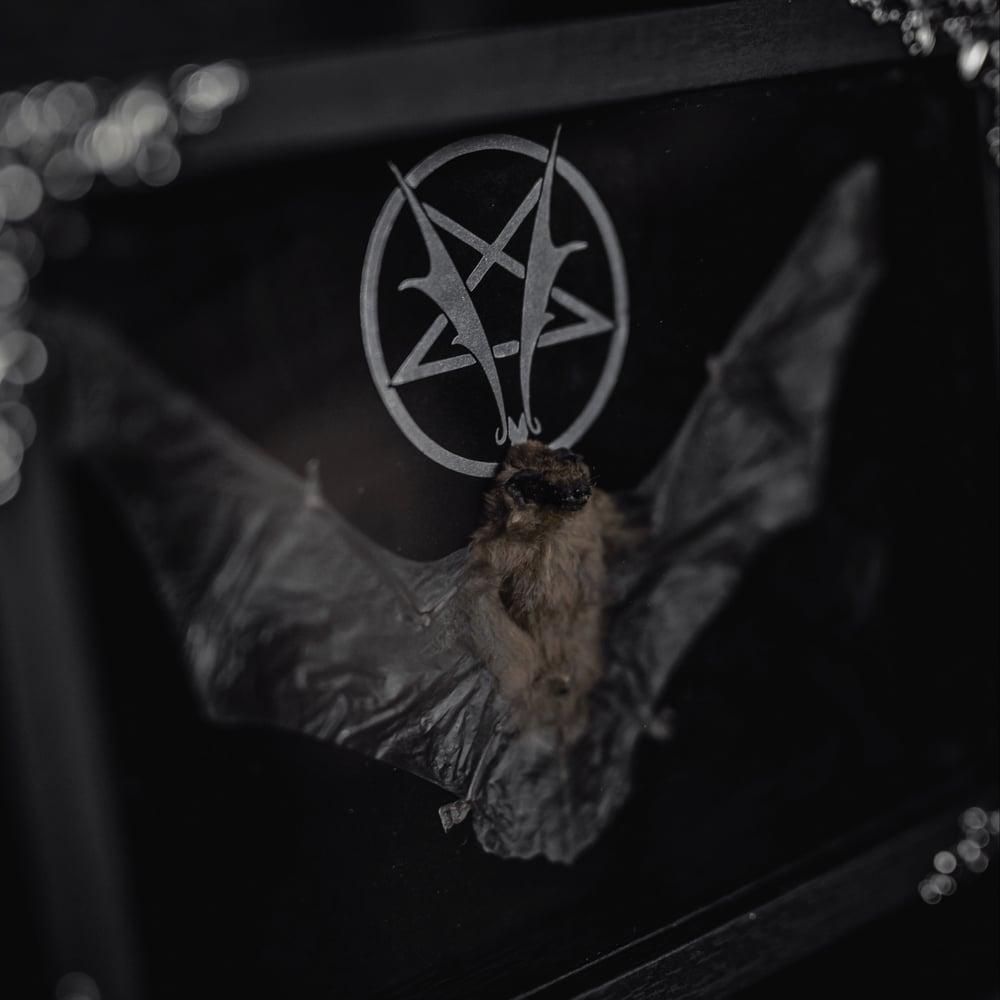 "Image of ""Batagram"" Bat (Vampires Everywhere!)"
