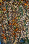 Monarch Cluster (#5)